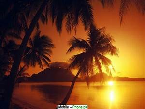 Tropical beach sunset Wallpapers Mobile Pics