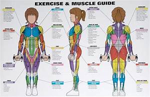 Best Exercises Targeting Each Muscle Group  With Images