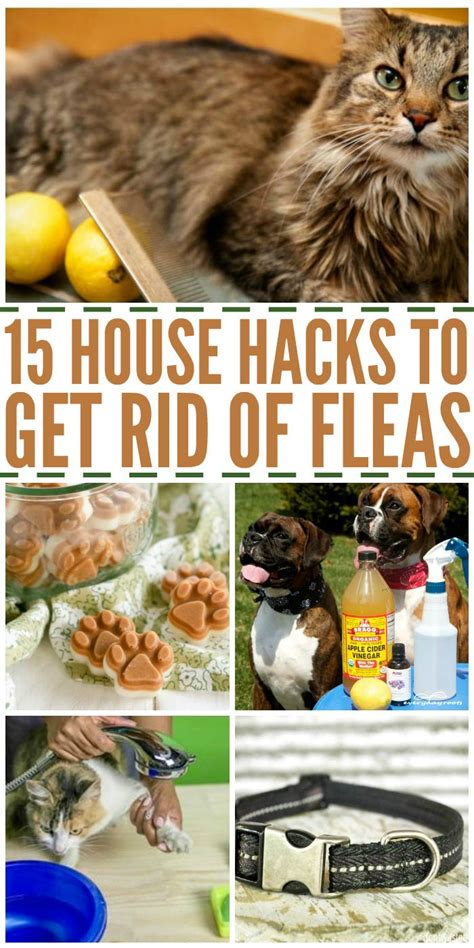 how to rid fleas in house 16 house hacks to get rid of fleas pets diy and crafts