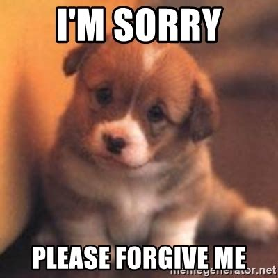 Forgive Me Meme - the gallery for gt sorry puppy meme