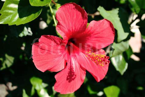 spanish flower
