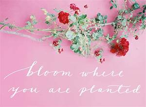 Quotes About Flowers Blooming. QuotesGram