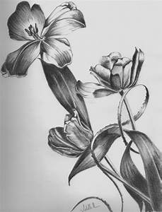 Pencil Art Photo: Flower Pencil Sketches