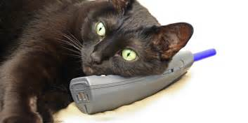 phone cat cat called bruce dials 999 and hangs up
