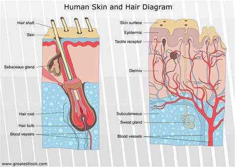disorders of the skin blackheads acne eczema and psoriasis
