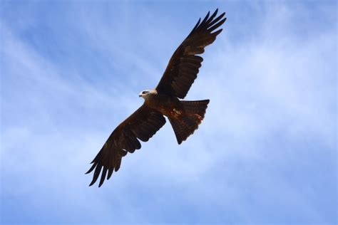 flying birds free stock photos download 3 589 free stock