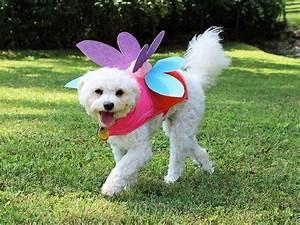 18 diy pet costumes for laurelwood animal hospital