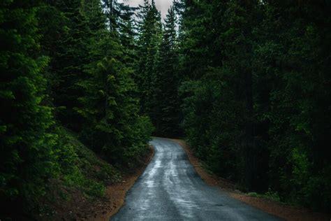 รูปภาพฟรี: ป่า ต้นไม้ ป่า ถนน