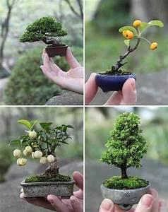Bonsai Stecklinge Machen : bonsai like the tiny sizes bonsai pinterest t pfchen balkon und pflanzen ~ Indierocktalk.com Haus und Dekorationen