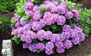 Hortensien Vermehren Wasserglas : hortensie vermehren vermehrung ~ Lizthompson.info Haus und Dekorationen