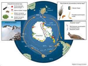 Poleward Bound  Biological Impacts Of Southern Hemisphere Glaciation  Trends In Ecology  U0026 Evolution