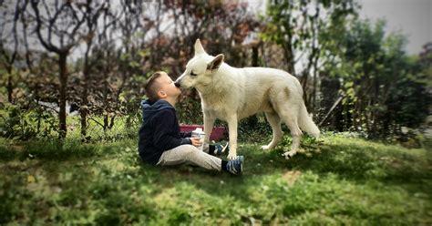 companion animals tennessee   youth development