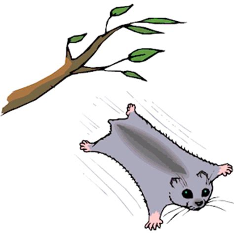 flying squirrel clipart cliparts  flying squirrel