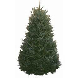 shop 9 ft to 10 ft fresh cut fraser fir christmas tree at lowes com