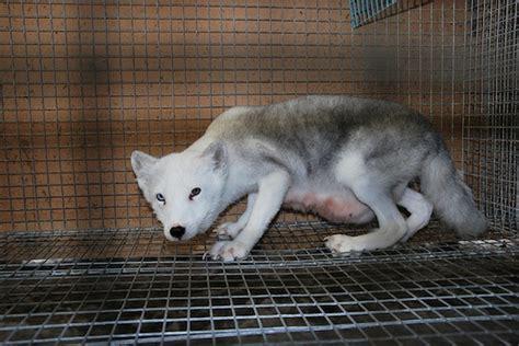 Animali In Gabbia - stop animali in gabbia l iniziativa europea petnews24