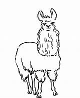 Llama Coloring Lesson Pages Drawing sketch template