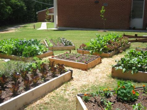 school garden ideas www imgkid the image kid has it
