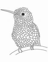 Hummingbird Coloring Pages Bird Hummingbirds Drawing Hard Humming Realistic Line Textured Flowers Printable Adults Drawings Popular Getdrawings Hovering Getcolorings Coloringhome sketch template