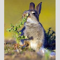 Poor Rabbit Was Tricked By Mother Nature Sharenator