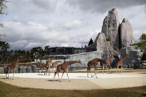 la nouvelle vie du zoo de vincennes magazine goodplanet info