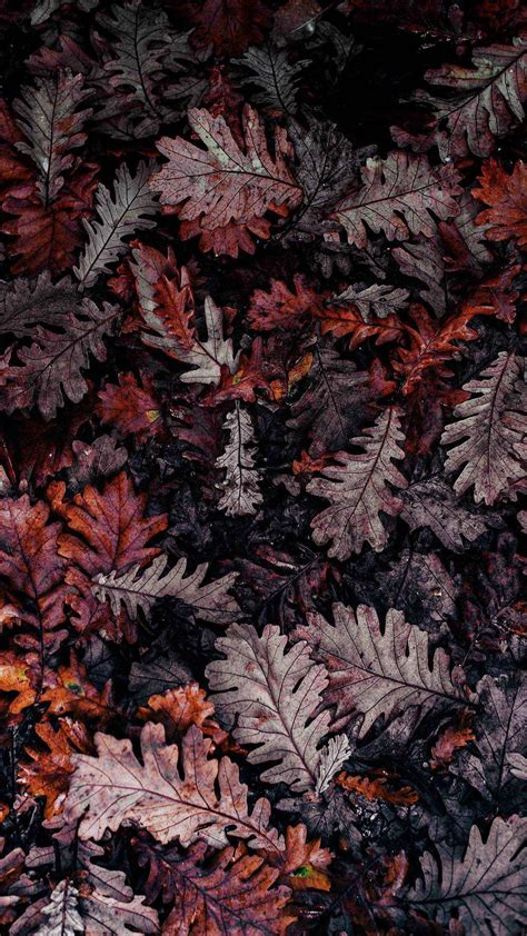 Fall Backgrounds For Iphone Aesthetic by Pin By Yang On 2019aw In 2019 Fall Wallpaper