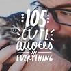 105 Cute Quotes on Everything - Bright Drops