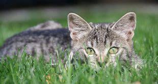 wie erkenne ich bei katzen das geschlecht haustierischde