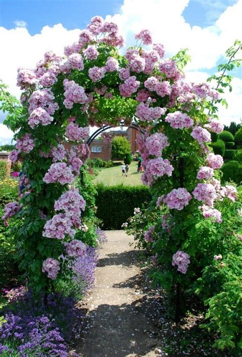 Rose Arch Garden Ideas Sotzen With Door Climbing Roses