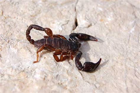 Welches Sternzeichen Passt Zu Skorpion welches sternzeichen passt zu skorpion singlehoroskop
