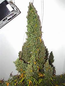 autoultimate grow review huge cannabis home grow with With katzennetz balkon mit led indoor garden