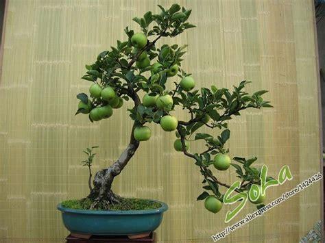 The + Best Bonsai Apple Tree Ideas On Pinterest