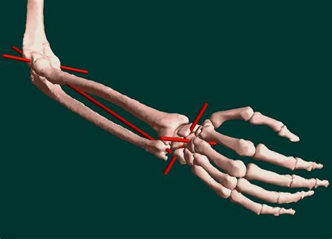 Forearm Supination And Pronation