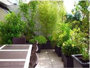 piante ricanti per terrazzo piante per terrazzo esposto a sud cerca con