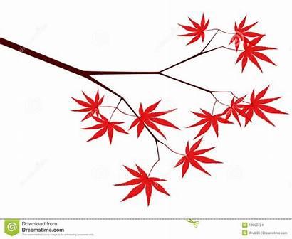 Maple Japanese Clipart Maples Tree Vector Illustration