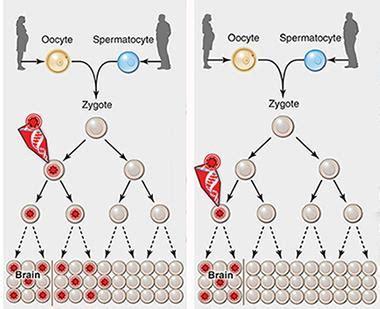 genetic mosaicism  adult neurons precipitate