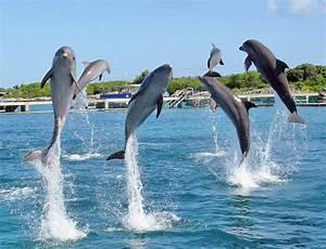Dolphin Discovery Isla Mujeres (Mexico): Address, Phone ...