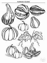 Gourd Drawing Getdrawings sketch template