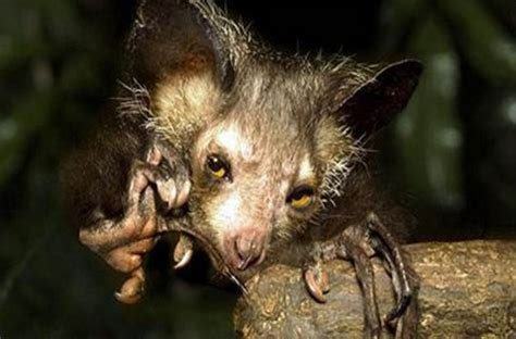 Top 10 Of The Most Ugliest Animals In The World Yorkfeed