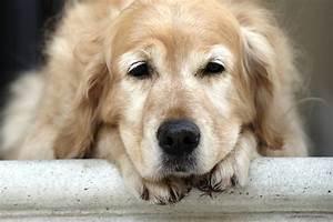 Простатит у собак способы лечения