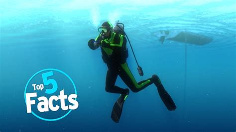 top  scuba diving facts youtube