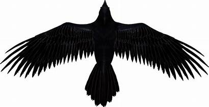 Raven Clipart Render Transparent Interesting Facts Deviantart