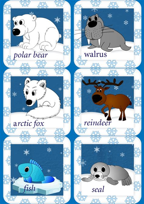 arctic animals song for children 857 | arctic animals flashcards