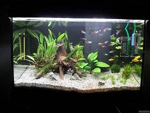 Aquarium Einrichten 60l : 60l tetra aquarium flowgrow aquascape aquarien datenbank ~ Michelbontemps.com Haus und Dekorationen