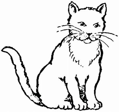 Cat Coloring Pages Drawing Realistic Printable Kitty