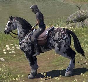 Elder Scrolls Online Piebald Destrier - ESO Fashion