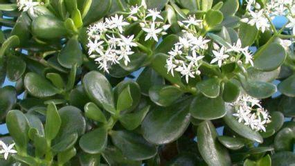 plante de bureau feng shui une plante grasse pour attirer la richesse