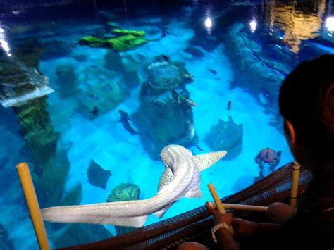 the sea aquarium shark week at sea aquarium get a free ticket popsicle