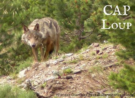 si鑒es sociaux lyon la spa de lyon se mobilise pour la protection du loup spa de lyon et du sud est site officiel