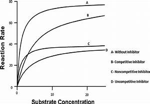 Reaction Rate Vs  Substrate Concentration Graph Showing