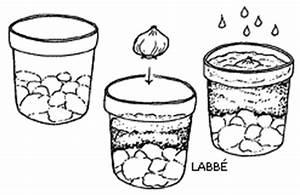 Tulpen Im Glas Ohne Erde : auf der fensterbank tulpen und hyazinthen zzzebra das web magazin f r kinder labb verlag ~ Frokenaadalensverden.com Haus und Dekorationen
